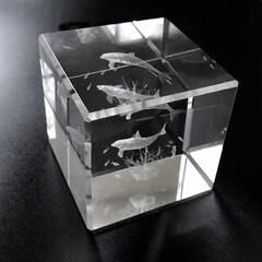 生き物/クリアキューブ/水族館/魚/雑貨/癒し/... ✴️★4センチの水族館★✴️  アクリル…