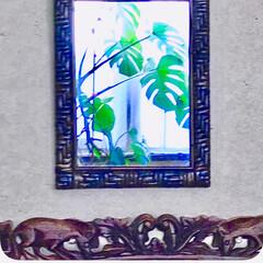 鏡/観葉植物のある暮らし/モンステラ モンステラを窓際に移動したら 鏡にいい感…