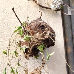 自然/オブジェ/手作り 🐝さんが引越したあと 巣をいただき(盗っ…