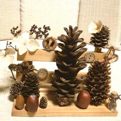 オブジェ/セリア/100均/ハンドメイド 山のお宝で工作しました❤️ 木の実シリー…