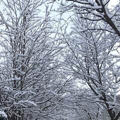 春/雪/樹木/癒し/散歩/公園/... *❄️北海道3月幻の雪景色❄️*  今朝…