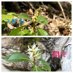 散策ウォーキング/珍しい花/山野草 名もなき山野草🍃  3月下旬に2ミリ程の…