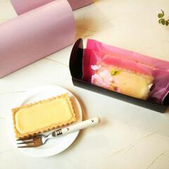 桜/チーズケーキ/わたしの手作り ミニサイズのチーズタルトを、桜柄のバリア…