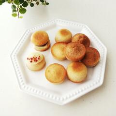 フィカス・プミラ・サニーホワイト   chanet(観葉植物)を使ったクチコミ「他のお菓子づくりで残った卵白を使い、ころ…」