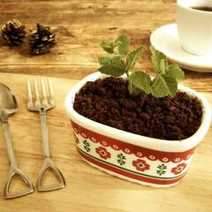 植木鉢/ムース/クッキー チョコレートムースの上に砕いたココアクッ…