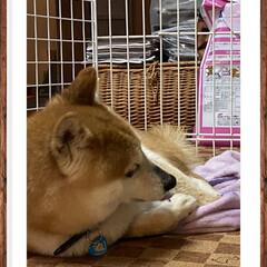 豆柴 雨だけど☔ 夜のお散歩に行ったよ🐕🐾🐾🐾…(3枚目)