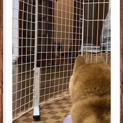 豆柴 雨だけど☔ 夜のお散歩に行ったよ🐕🐾🐾🐾…(6枚目)