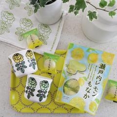 イッタラ iittala ティーマ ホワイト 18495 ティーポット 1.0L 蓋 付き | イッタラ(ティーポット)を使ったクチコミ「おやつ🍋 レモン系みたらついつい買ってし…」
