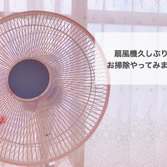 小掃除/お掃除/扇風機お手入れ/扇風機/簡単/掃除/... 【扇風機】小掃除のススメ✨✨  久しぶり…