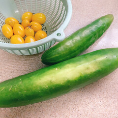 トマト/きゅうり/無農薬野菜/無農薬栽培/おうち野菜/野菜/... おうち野菜☺︎  こだわりの無農薬栽培✨…