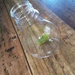 電球風LEDオーナメント/電球オブジェ/電球型/インテリア雑貨/キャンドゥ/ダイソー/... 100均で見つけた LDE付き電球オーナ…(2枚目)