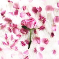薔薇/花束/バスタイム/薔薇のお風呂/ローズ/入浴剤/... 先日いただいた薔薇の花束。 薔薇が枯れて…