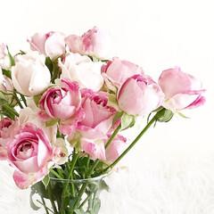 薔薇/ローズ/スプレー薔薇/花のある暮らし/暮らし/丁寧な暮らし/... モールの入り口でセット売りになっていたス…