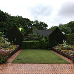 広い公園/大阪府堺市 大泉緑地(4枚目)