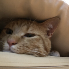 保護猫/愛猫/猫との暮らし 頭隠してしっぽかくさずฅ( ̳• ·̫ …