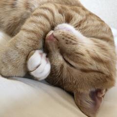 猫馬鹿/猫との暮らし 寝顔可愛いなぁ〜♥️ 癒される 旦那と私…