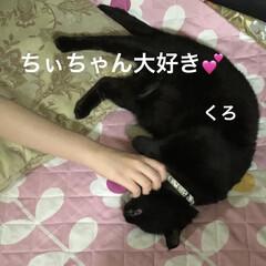 晩ご飯/黒猫/くろ/にこ/猫/めん こんばんはです。今日も一日お疲れ様です。…(2枚目)