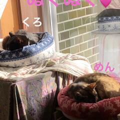 くろ/にこ/黒猫/めん/猫/癒し/... お日様出てきたらくろもめんもぬくぬく☀️…(1枚目)