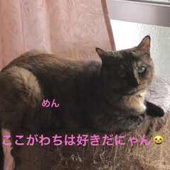 黒猫/くろ/にこ/猫/めん こんにちは😊 良いお天気ですね。 気候が…(8枚目)