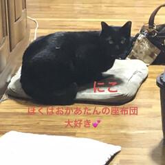 晩ご飯/猫のいる暮らし/猫とインテリア/にゃんこ同好会/LIMIAペット同好会/ねこと暮らすお部屋/... 今日も一日お疲れ様です。晩ご飯何にしよう…(8枚目)