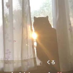 空/黒猫/くろ/にこ/猫/めん おはようございます。 早朝はお日様見えて…(2枚目)