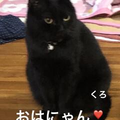 朝ご飯/空/晩ご飯/にこ/くろ/黒猫/... おはようございます☀ 連休明け平常が戻り…(2枚目)