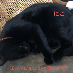 空/黒猫/にこ/くろ/猫/めん 今日はいいお天気。久しぶりに坂道下って駅…(3枚目)