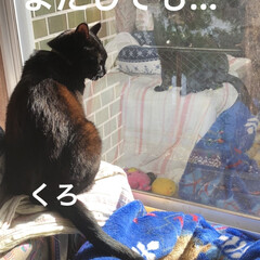 空/猫/猫飼いのしあわせ/くろ/にこ/黒猫/... おはようございます。 良いお天気です。し…(5枚目)