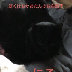 空/猫/猫飼いのしあわせ/くろ/にこ/黒猫/... おはようございます。 良いお天気です。し…(4枚目)