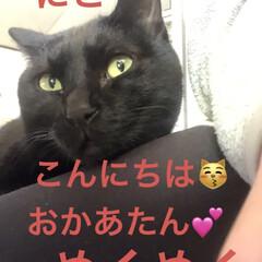 癒し/猫飼いのしあわせ/黒猫/にこ いつになく私につきまとうにこ。 リズム遊…(1枚目)