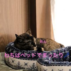 めん/猫/くろ/にこ/黒猫/空 おはようございます 朝焼け綺麗でした❣️…(4枚目)