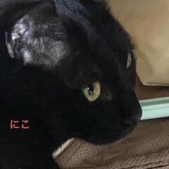 癒し/猫飼のしあわせ/にこ/黒猫 朝から旦那さんがコンロの設置をしてくれて…(5枚目)
