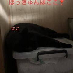 猫/めん/黒猫/くろ/にこ/空 おはようございます☀ 今朝の朝焼け綺麗で…(3枚目)
