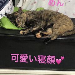 にこ/黒猫/猫/めん/癒し/猫飼さんのしあわせ 普段の遊ぶ姿も可愛いけどめんの寝顔は天使…(1枚目)
