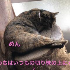 空/黒猫/にこ/くろ/猫/めん 今日はいいお天気。久しぶりに坂道下って駅…(4枚目)