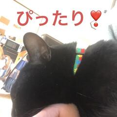 癒し/猫飼いのしあわせ/黒猫/にこ いつになく私につきまとうにこ。 リズム遊…(10枚目)