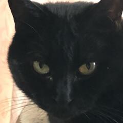 晩ご飯/黒猫/くろ/にこ/猫/めん こんばんはです。 今日も一日お疲れ様です…(1枚目)