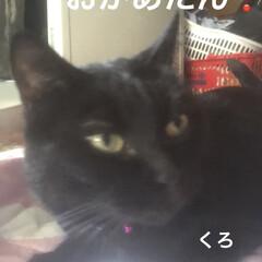 黒猫/くろ/にこ/猫/めん 今日の猫さまたち😼😺😸 やっぱりわかるん…(4枚目)