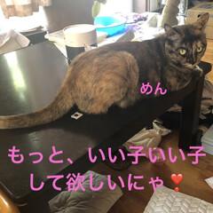 黒猫/くろ/にこ/猫/めん 今日の猫さまたち😼😺😸 やっぱりわかるん…(5枚目)