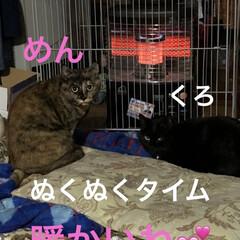 朝ご飯/猫/めん/黒猫/くろ/にこ 今朝も冷えますね。 猫さまたちそれぞれの…(5枚目)