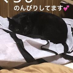 晩ご飯/黒猫/にこ/くろ/猫/めん/... ずーっと旦那さんが食べたがってた焼き肉。…(4枚目)