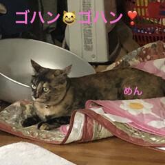 猫/めん/黒猫/くろ/にこ 夕方の猫さまたち。お腹が空くと私のそばに…(2枚目)