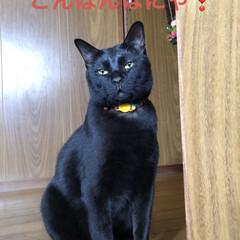 くろ/にこ/黒猫/癒し/猫飼いのしあわせ/猫 今日も一日お疲れ様です。うちの子たちはよ…