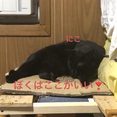 晩ご飯/黒猫/くろ/にこ/猫/めん こんばんはです。晩ご飯は女子飯。ズッキー…(5枚目)