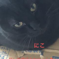 空/めん/猫/にこ/くろ/黒猫 おはようございます☀ 今日は良いお天気😊…(5枚目)