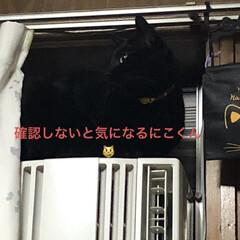晩ご飯/めん/猫/にこ/くろ/黒猫 こんばんはです。 今日も一日お疲れ様でし…(5枚目)