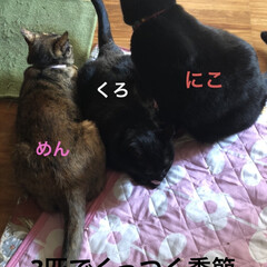 空/黒猫/にこ/くろ/猫/めん 今日はいいお天気。久しぶりに坂道下って駅…(2枚目)