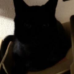 癒し/猫飼のしあわせ/にこ/黒猫 わかるかな⁉️お目目がなんとなく見えるん…