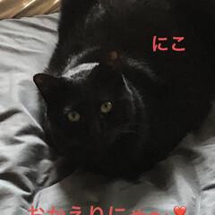購入品/お昼ご飯/黒猫/くろ/にこ/猫/... 午前中駅前まで行きは歩いて帰りはバスで行…(5枚目)