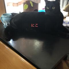空/黒猫/くろ/にこ/猫/めん おはようございます☀ 暑いですね💦 少し…(7枚目)